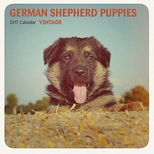 Magnet & Steel 2017 German Shepherd Puppies Calendar, Min...
