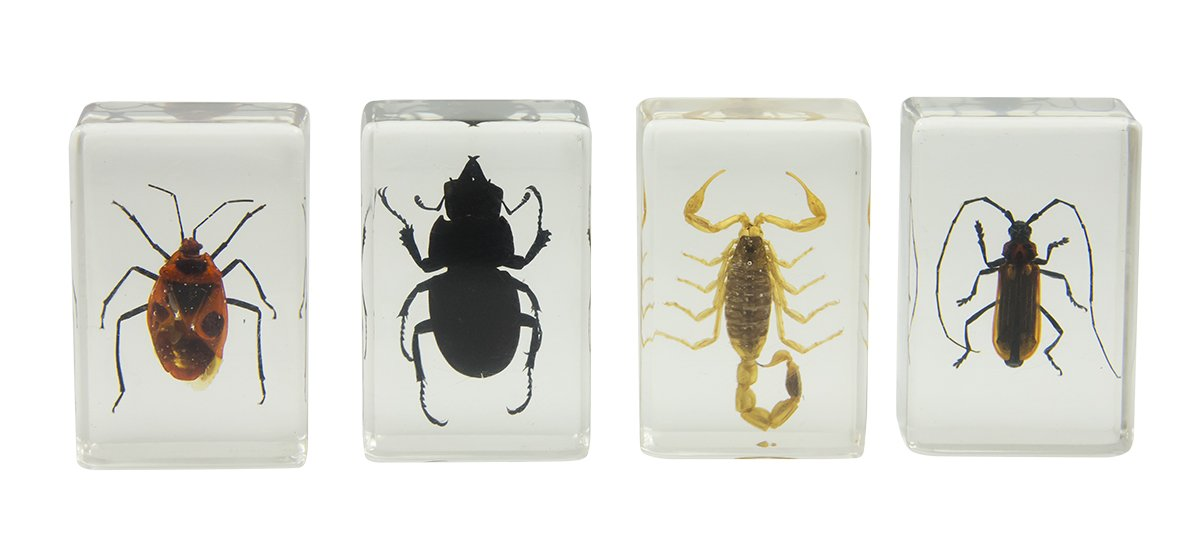 Celestron 44407 3D Bug Specimen Kit #1 (Black, Brown, Yellow)