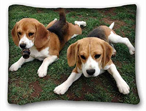 TSlook Throw Blankets Beagle Puppies Animals Fleece Blanket for Couch/Sofa/Bed 40x50