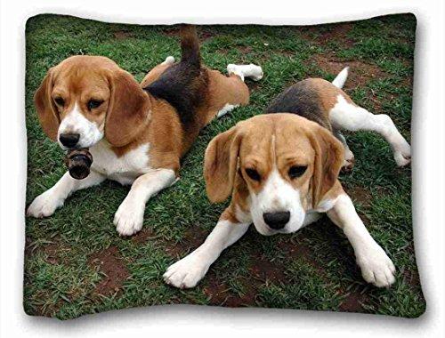 Beagle Fleece - TSlook Throw Blankets Beagle Puppies Animals Fleece Blanket for Couch/Sofa/Bed 40x50