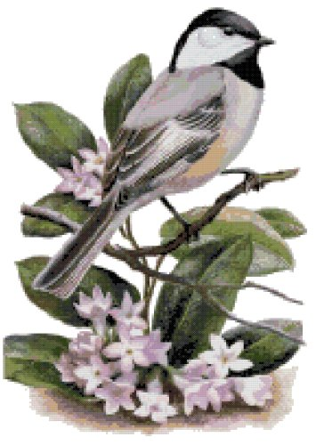 Massachusetts State Bird (Black-Capped Chickadee) and Flower (Mayflower) Counted Cross Stitch Pattern