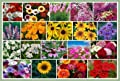 David's Garden Seeds Wildflower Late Bloomer Mix DGS118WCP (Various) 1000 Open Pollinated Seeds
