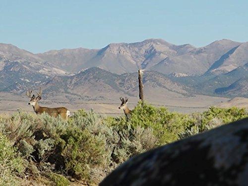 Nevada Mule Deer Dilemma