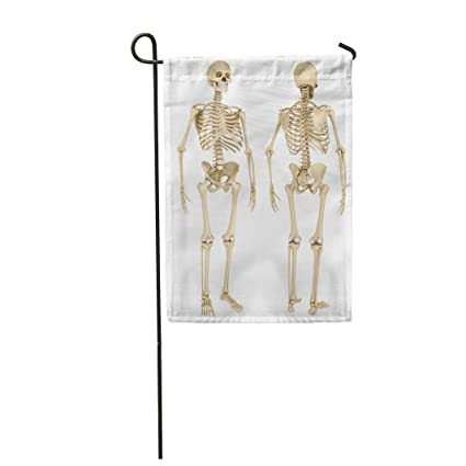 Amazon com : Semtomn Garden Flag Anatomy Human Skeleton