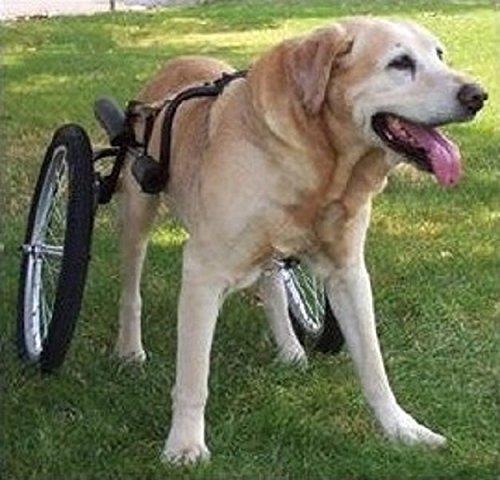 big-kahuna-with-wheels