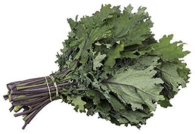 Organic Kale Seeds - Red Russian Kale