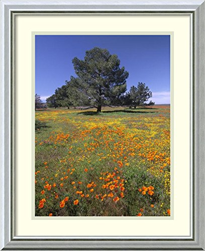 Framed Wall Art Print | Home Wall Decor Art Prints | California Poppy and Eriophyllum Field, Antelope Valley, California by Tim Fitzharris | Modern Decor