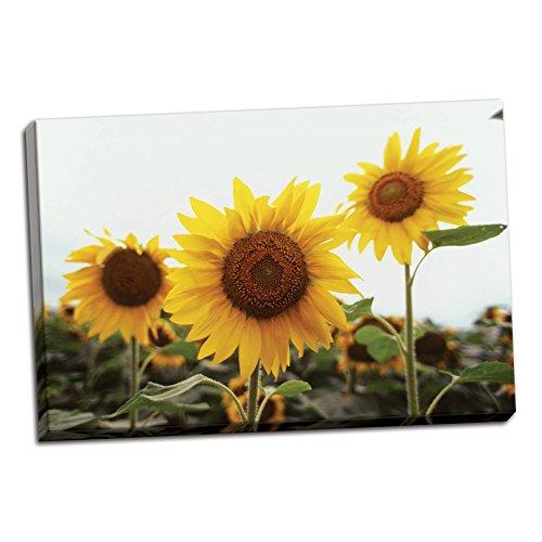 sunflower fields iii