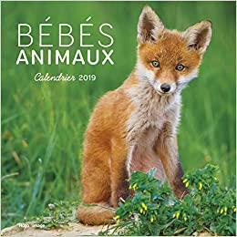 Calendrier Animaux.Amazon Fr Calendrier Mural Bebes Animaux 2019 Collectif