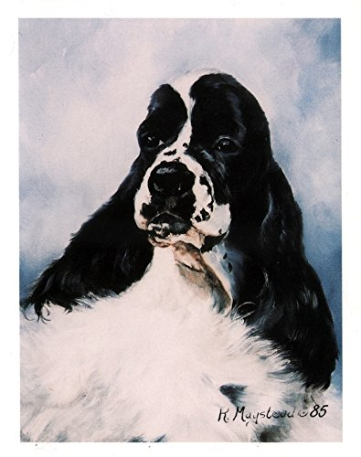 Black and White Cocker Spaniel Head Study Notecards