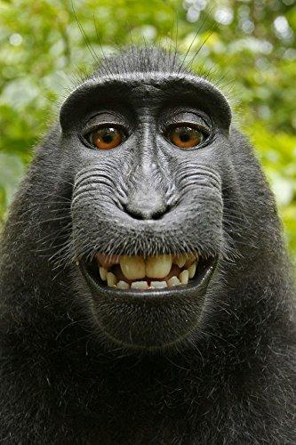 monkey selfie poster