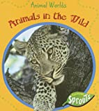 Animals in the Wild, Sue Barraclough, 1410918963
