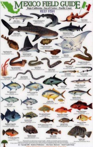 Sport Fish: Baja California - Sea of Cortez - Pacific Coast (Mexico Field Guides)