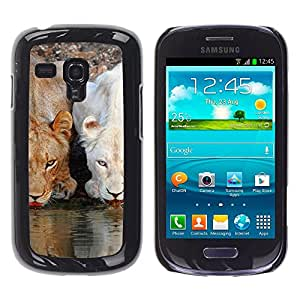 iBinBang / Funda Carcasa Cover Skin Case - León lindo Naturaleza Agua África Animales - Samsung Galaxy S3 MINI NOT REGULAR! I8190 I8190N
