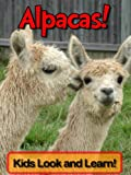 Alpacas! Learn About Alpacas and Enjoy Colorful Pictures - Look and Learn! (50+ Photos of Alpacas)