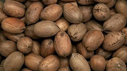 Best pecans bulk in shell list