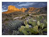 """Global Gallery """"Tim Fitzharris Opuntia Cactus And Agave Guadalupe Mountains National Park Chihuahuan Desert Texas"""" Unframed Giclee on Paper Print Wall Art, 18"""" x 24"""""""