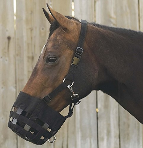 Best Friend Padded Leather Crown Grazing Muzzle (Best Friend Grazing Muzzle)