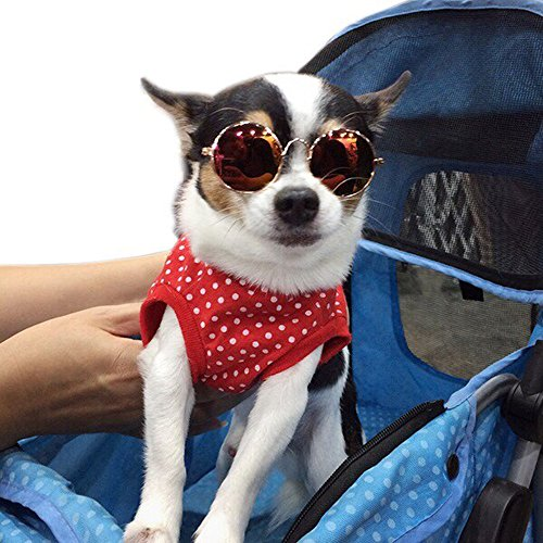 cool style retro sunglasses for small dogs and cats.[Multi-colors and colors can't be - For Sunglasses Dog