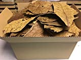 Indian Almond Leaves B-Grade (quality, kinked and broken=350gram) Worldwide from catappa-leaves.de - your animals will not spring out, guaranteed