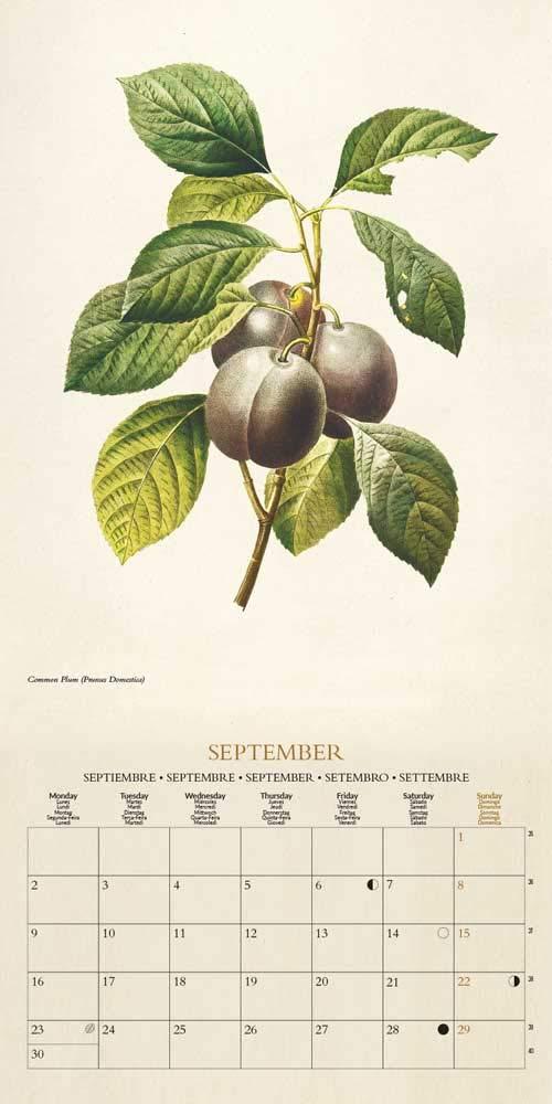 Grupo Erik Calendario Da Muro 2019 Botanical 30 X 30 Cm