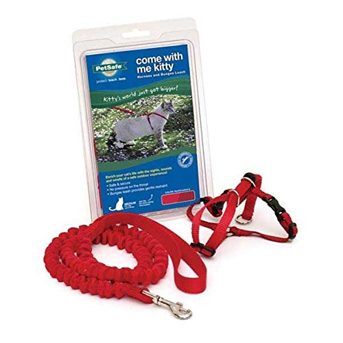 (PetSafe Come With Me Kitty Harness and Bungee Leash, Harness for Cats, Medium, Red/Cranberry)