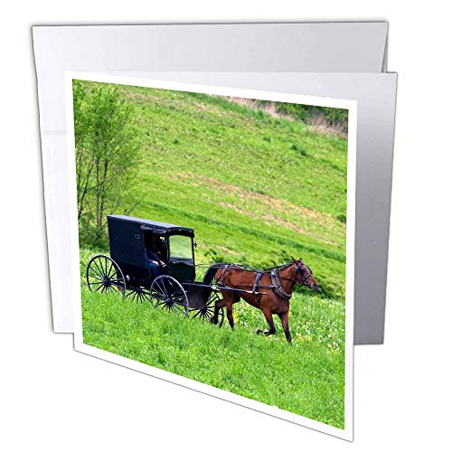 3dRose Greeting Cards, Ohio, 6 x 6 Inches, Amish Farm with Horse Buggy Near Berlin (gc_93371_1)