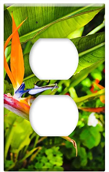 Switch Plate Outlet Cover Bird Of Paradise Flower Flower Blossom Bloom Exotic Amazon Com