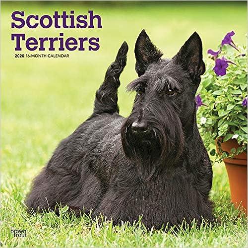 Scottish Terriers 2020