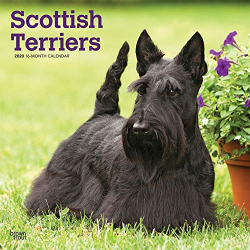 Scottish Terriers 2020 12 x 12 Inch Monthly Square Wall Calendar, Animals Dog Breeds by BrownTrout Publishers Inc.