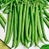 "230 Seeds, Bush Bean""Slenderette"" (Phaseolus vulgaris) Seeds By Seed Needs"