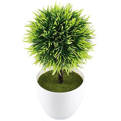 moss ball in urn - 3