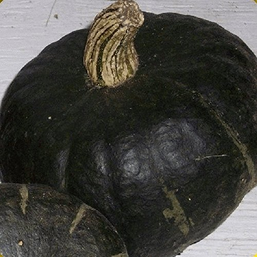 Everwilde Farms - 40 Burgess Buttercup Winter Squash Seeds - Gold Vault Jumbo Seed Packet ()