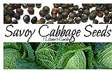 Liliana's Garden Cabbage Seeds - Savoy Perfection - Heirloom