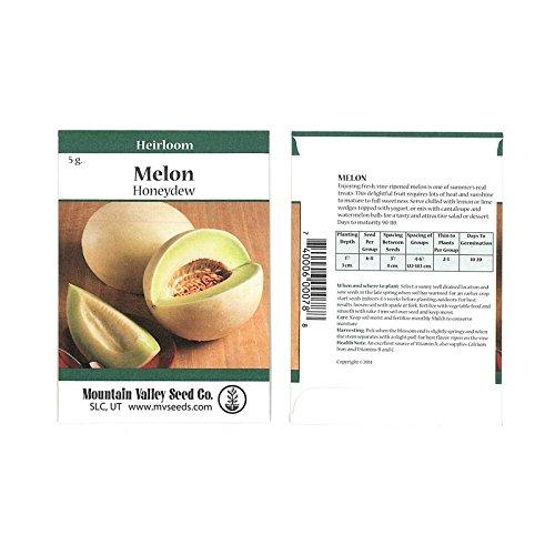 Oval Sprout Green (Honeydew Melon Garden Seeds - Green Flesh - 5 Gram Packet - Non-GMO, Heirloom Vegetable Gardening Seed - Honey Dew Fruit)