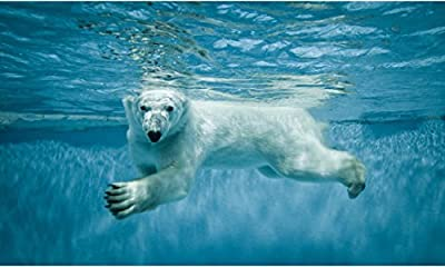 """24"""" Mini-Mural Sea Scape Series Polar Bear swimming #1 Wall Decal Sticker Graphic Home Kids Game Room Office Landscape Art Man Cave Decor NEW"""