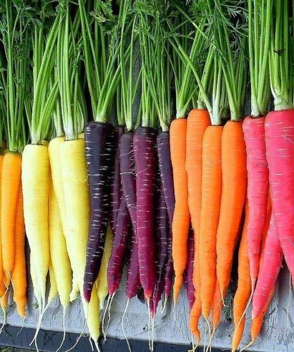 Rainbow Carrot Blend Mix, Seeds, Colorful, Non-GMO, Beta Carotene, Vitamin ()
