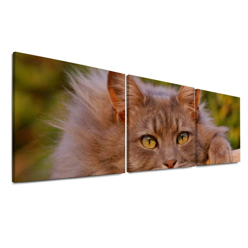 NOAON for Home Decor Room Wood Framed 16 x 16 Inch x 3 Pcs Cat Feline Furry Pet Canvas Prints Ready to Hang Wall Art by NOAON