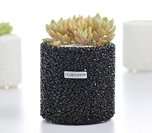 Succulent Plant Pot,Breathable&With Drainage Mini 3.26