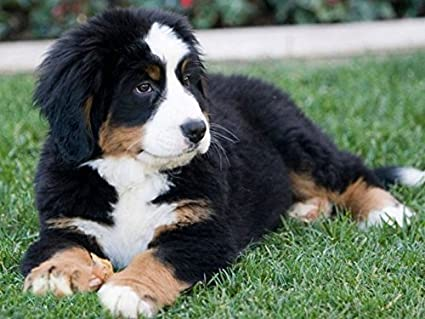 Amazoncom A Slice In Time Package Of Four 4 Bernese