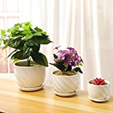 Yinger-WG Set of 3 Ceramic Plant Pot - Flower Plant