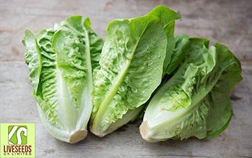Liveseeds - Lettuce Little Gem -200- Finest UK Seeds (Best Lawn Seed Uk)