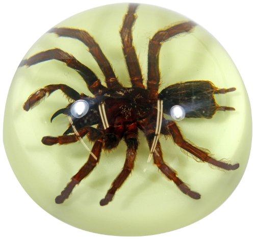 Spider Paperweight - 3 1/2