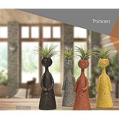 Thinkers Ceramic Vase with Living Air Plant - Black - 2