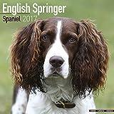 English Springer Spaniel Calendar 2017 (Euro) - Dog Breed Calendars - 2016 - 2017 wall calendars - 16 Month by Avonside