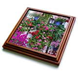 3dRose Danita Delimont - Flowers - Spain, Andalusia. Cordoba. Flowers during the Festival of the Patio. - 8x8 Trivet with 6x6 ceramic tile (trv_277892_1)