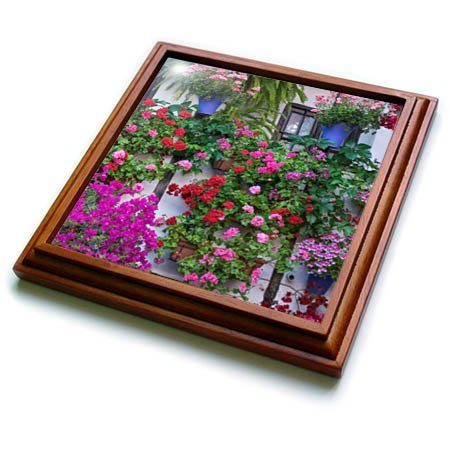 3dRose Danita Delimont - Flowers - Spain, Andalusia. Cordoba. Flowers during the Festival of the Patio. - 8x8 Trivet with 6x6 ceramic tile (trv_277892_1) by 3dRose