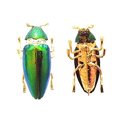 KARATGEM Natural Metallic Wood-Boring Beetle Brooch Pin Vintage GP BH23 Pins and Brooches Gold Plated Locket Brooch