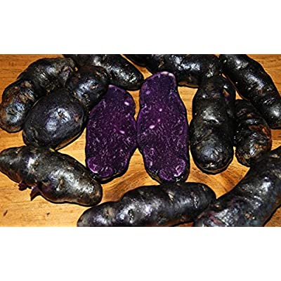 Simply Seed - 15 Piece - Purple Peruvian Potato Seed - Non GMO - Organic Grown - Order Now for Spring Planting : Garden & Outdoor