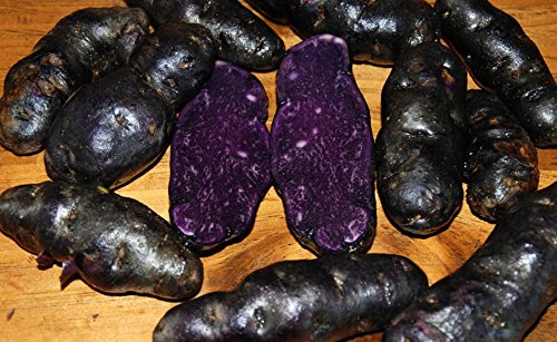 Simply Seed - 15 Piece - Purple Peruvian Potato Seed - Non GMO - Organic Grown - Order Now for Spring Planting (Sweet Potato Nuggets)